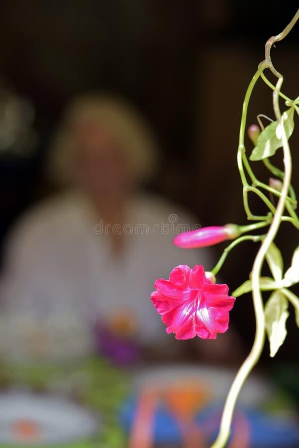 Fiore rosa che incornicia la figura della signora anziana fotografie stock