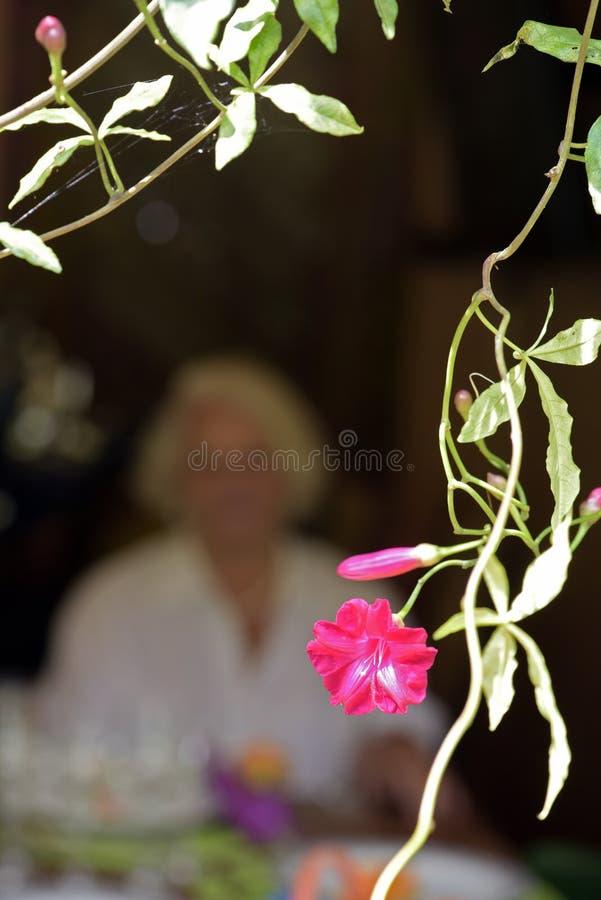 Fiore rosa che incornicia la figura della signora anziana immagini stock libere da diritti