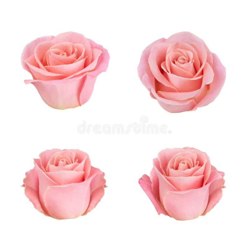Fiore rosa del corallo Dettagliato ritocchi immagine stock libera da diritti