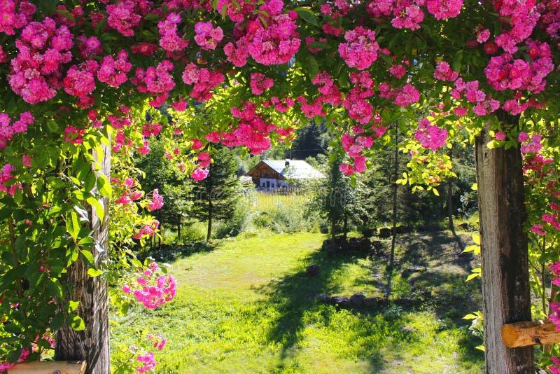 Fiore rosa del fiore delle rose della casa dolce casa della casa fotografia stock