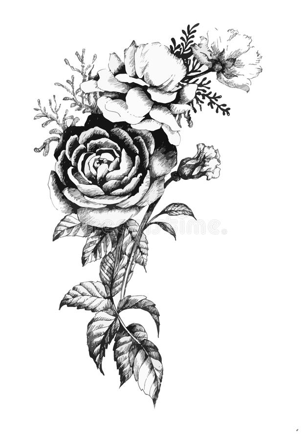 Fiore rosa del giardino disegnato a mano isolato su fondo bianco illustrazione di stock