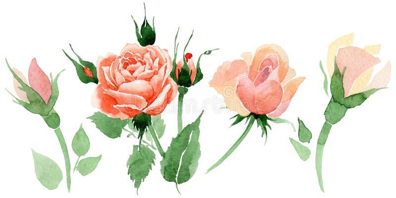 Fiore rosa del Wildflower in uno stile dell'acquerello isolato illustrazione vettoriale
