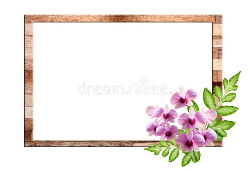Fiore rosa dell'orchidea e foglia verde fotografia stock libera da diritti