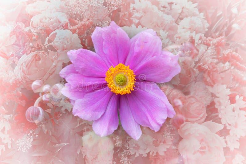 Fiore rosa di japonica dell'anemone immagini stock libere da diritti