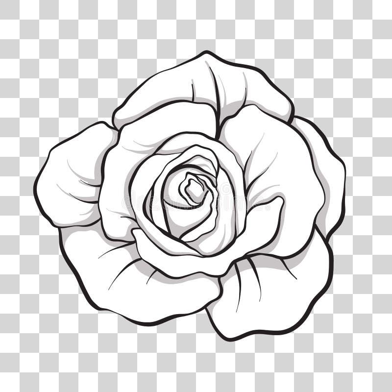 Fiore rosa isolato del profilo Illustrazione di riserva di vettore royalty illustrazione gratis