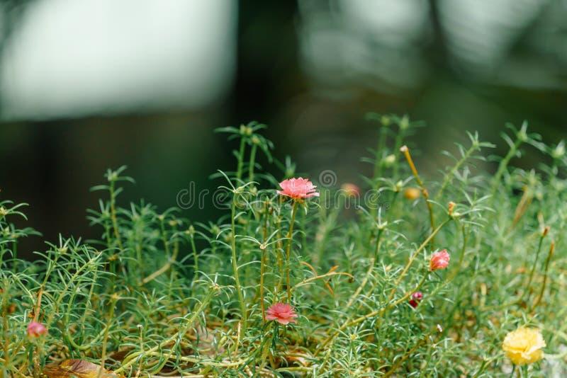 Fiore rosa nel fondo confuso verde fotografia stock libera da diritti