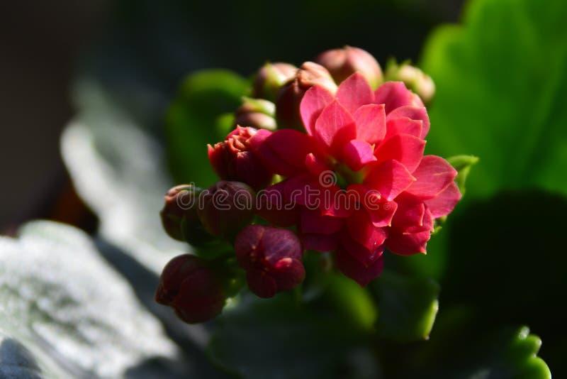 Fiore rosa piccolo sulla finestra fotografia stock