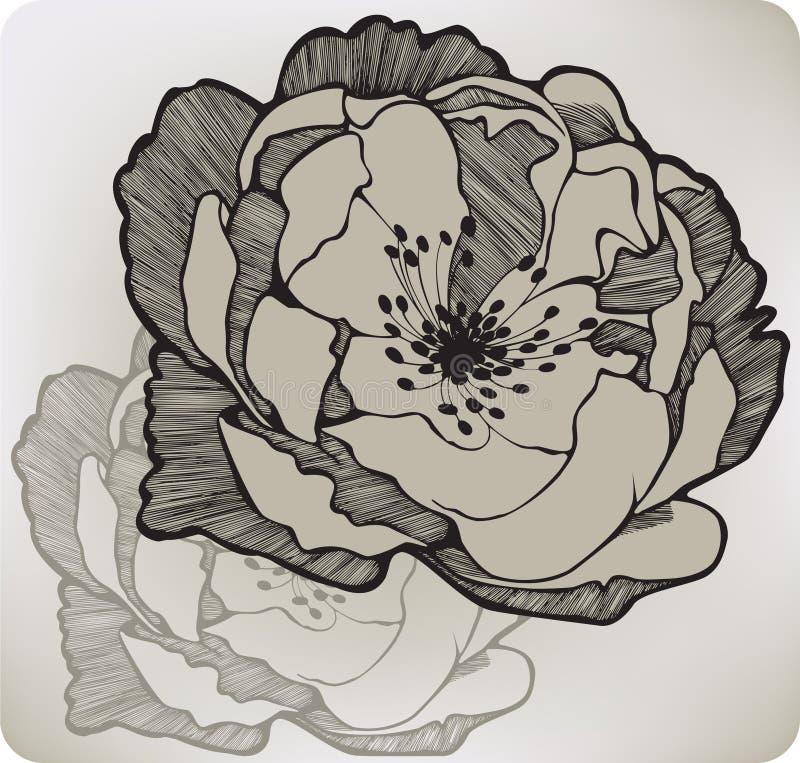 Fiore rosa selvaggio, a mano disegno royalty illustrazione gratis