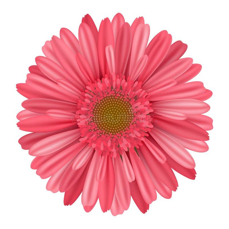 Fiore rosa separato della gerbera della margherita dalla cima royalty illustrazione gratis
