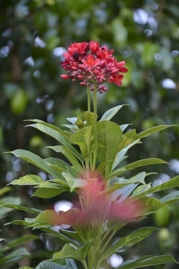 Fiore rosa sottolineato - 11 immagine stock libera da diritti