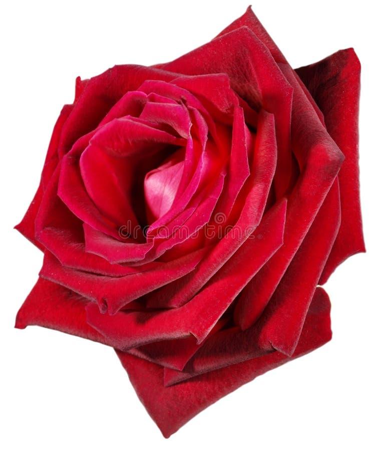Download Fiore rosso immagine stock. Immagine di velluto, fresco - 213513