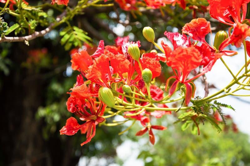 Download Fiore rosso fotografia stock. Immagine di antique, foglio - 30830770