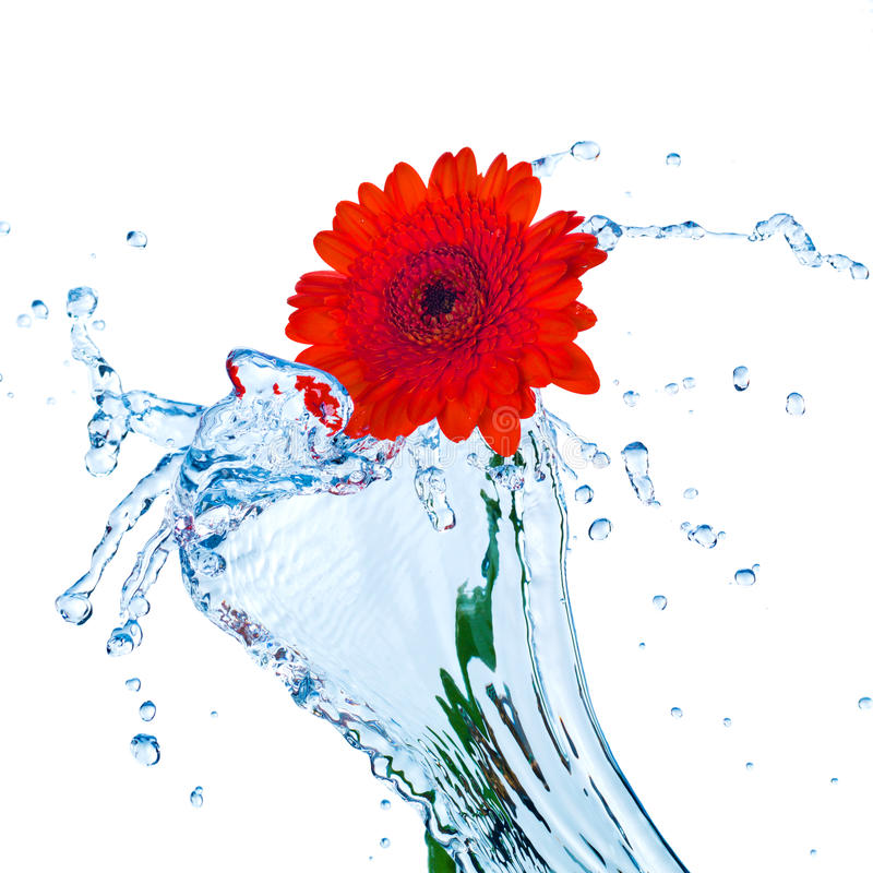 Fiore rosso con la spruzzata dell'acqua fotografie stock libere da diritti