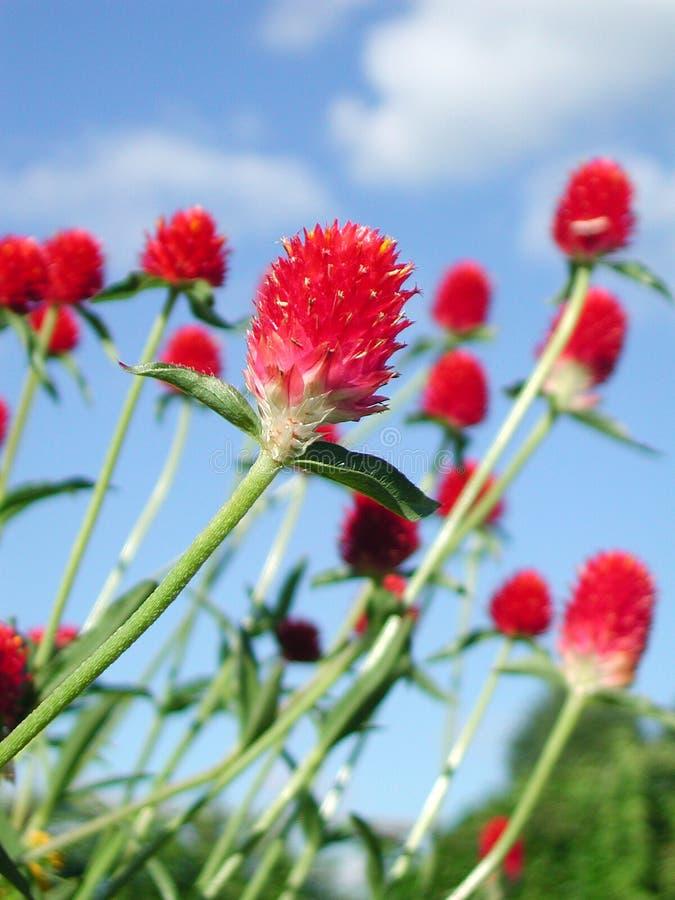 Fiore rosso con in pieno della vitalità fotografia stock