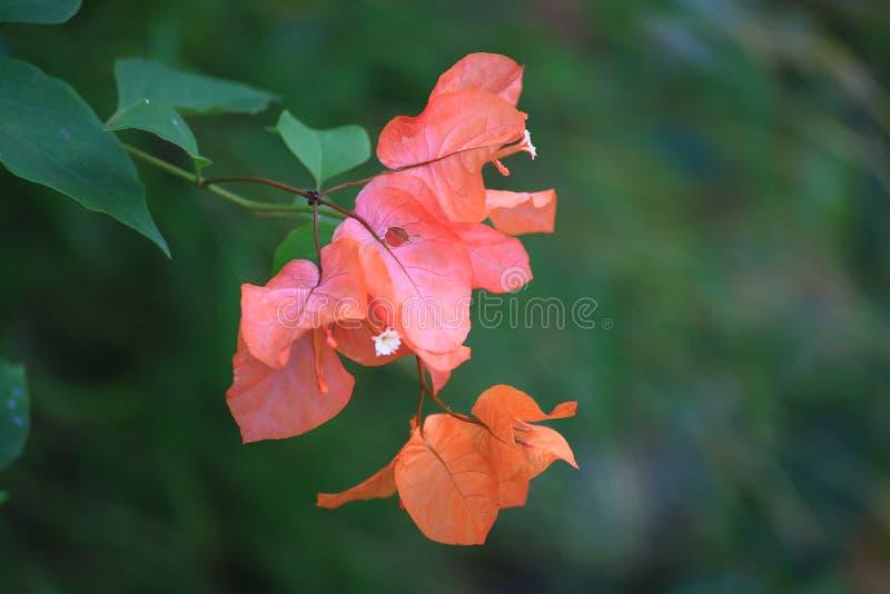 Fiore rosso dal fiume fotografia stock