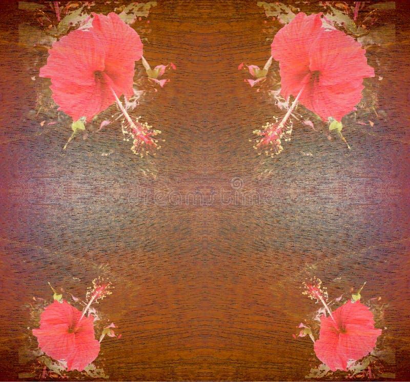 Fiore rosso dell'ibisco immagini stock libere da diritti