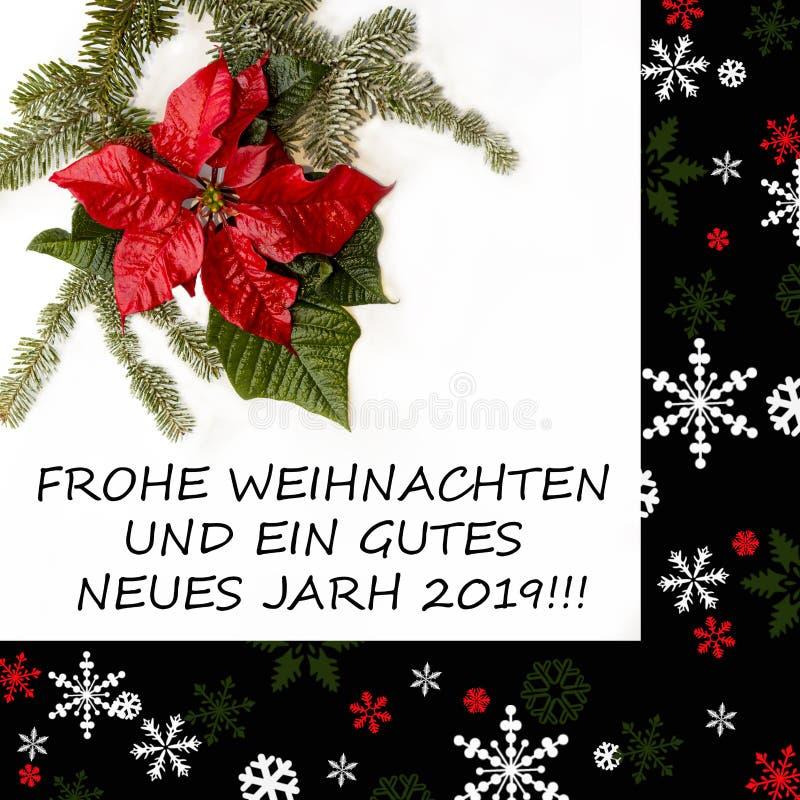 Fiore rosso della stella di Natale con l'albero di abete e neve su fondo bianco Cartolina di Natale di saluti cartolina christmas immagine stock