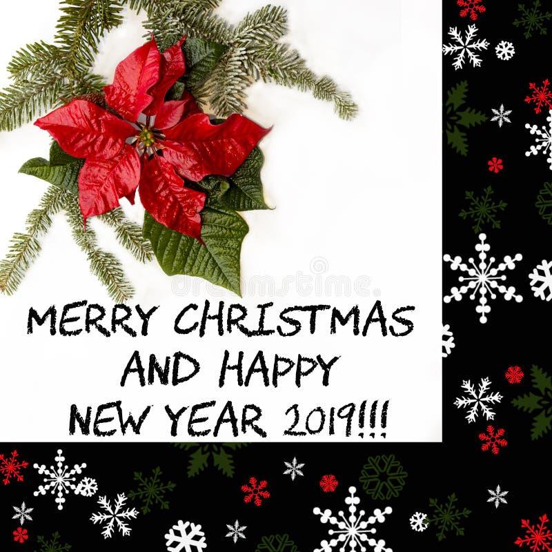 Fiore rosso della stella di Natale con l'albero di abete e neve su fondo bianco Cartolina di Natale di saluti cartolina christmas immagine stock libera da diritti