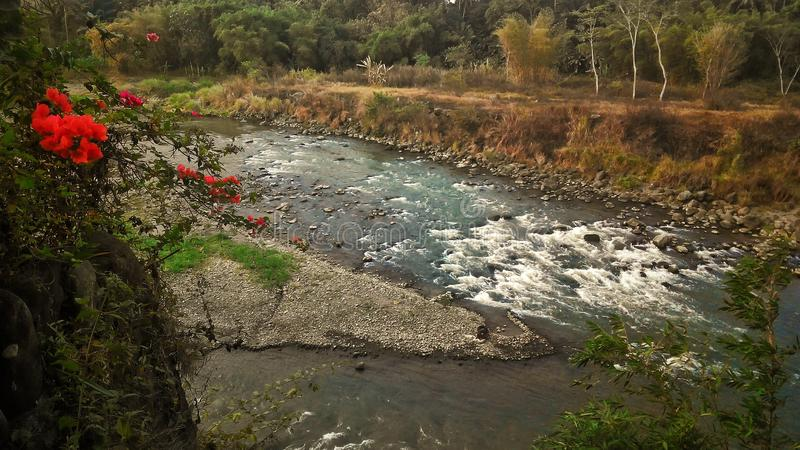 Fiore rosso ed il fiume immagine stock