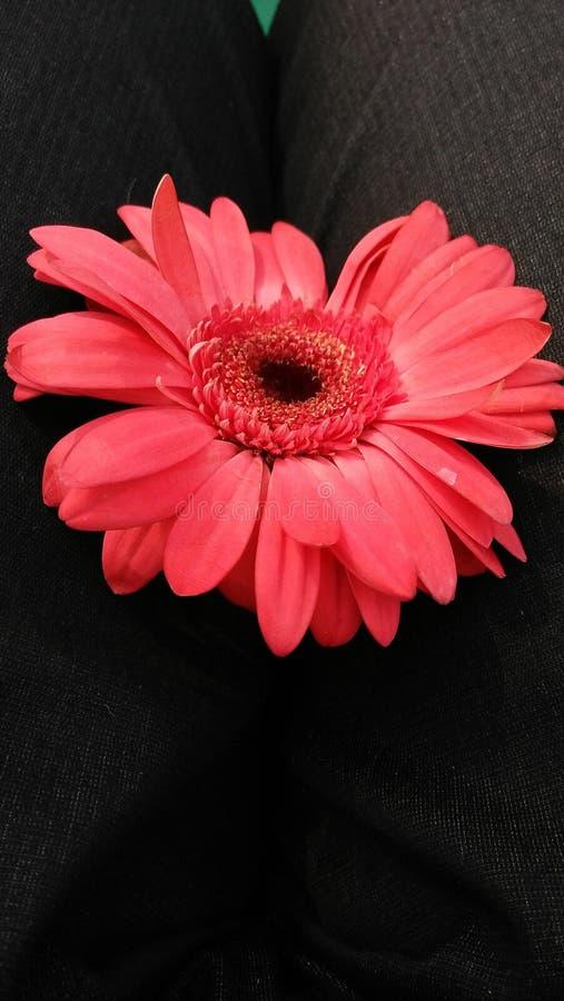 Fiore rosso stupefacente con il fondo del gret immagine stock libera da diritti