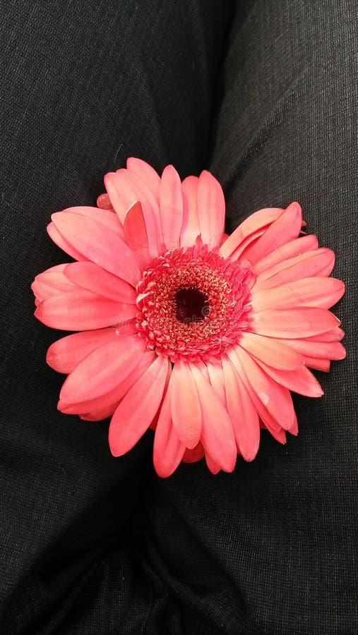 Fiore rosso stupefacente con il fondo del gret immagini stock