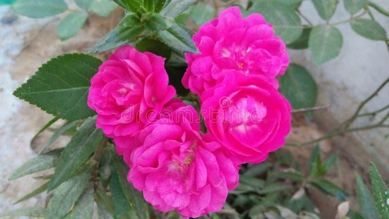 Fiore rosso stupefacente con il fondo del gret immagini stock libere da diritti