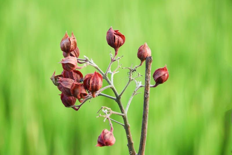 Fiore rosso su priorit? bassa verde fotografia stock