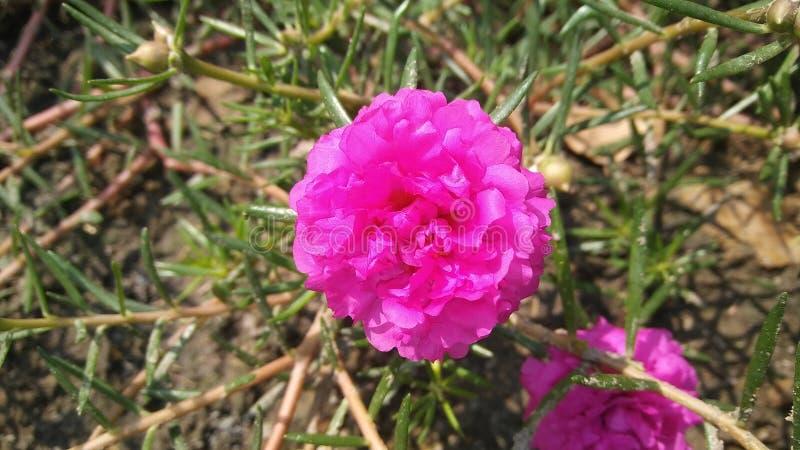 Fiore s fotografia stock