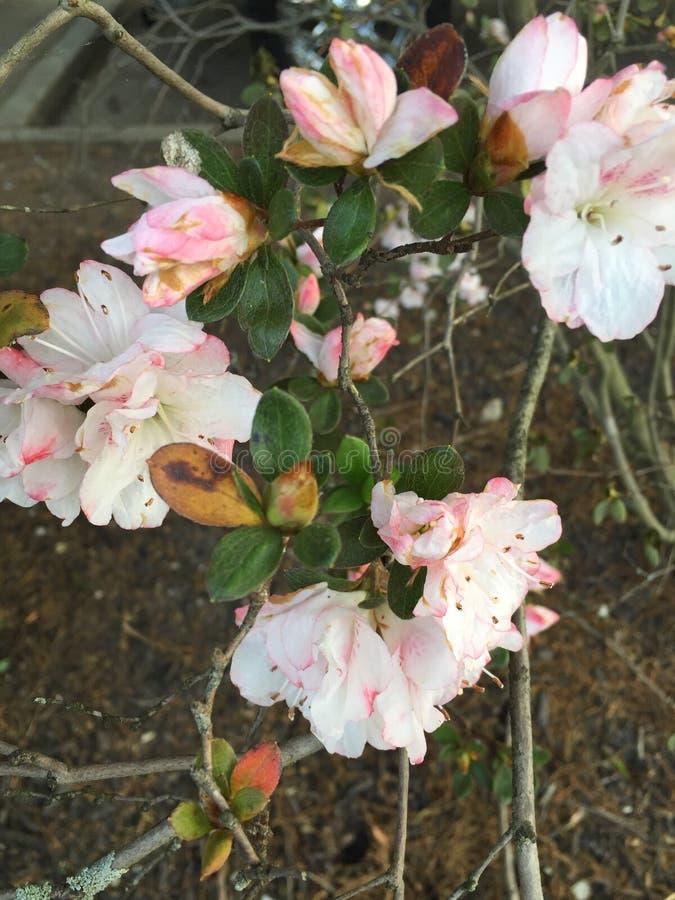 Fiore sbiadetto fotografia stock libera da diritti