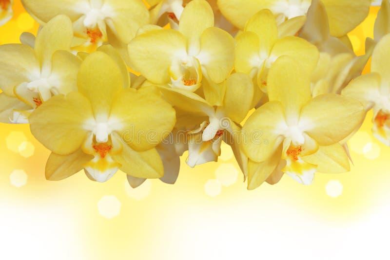 Fiore sbocciante dell'orchidea fotografia stock