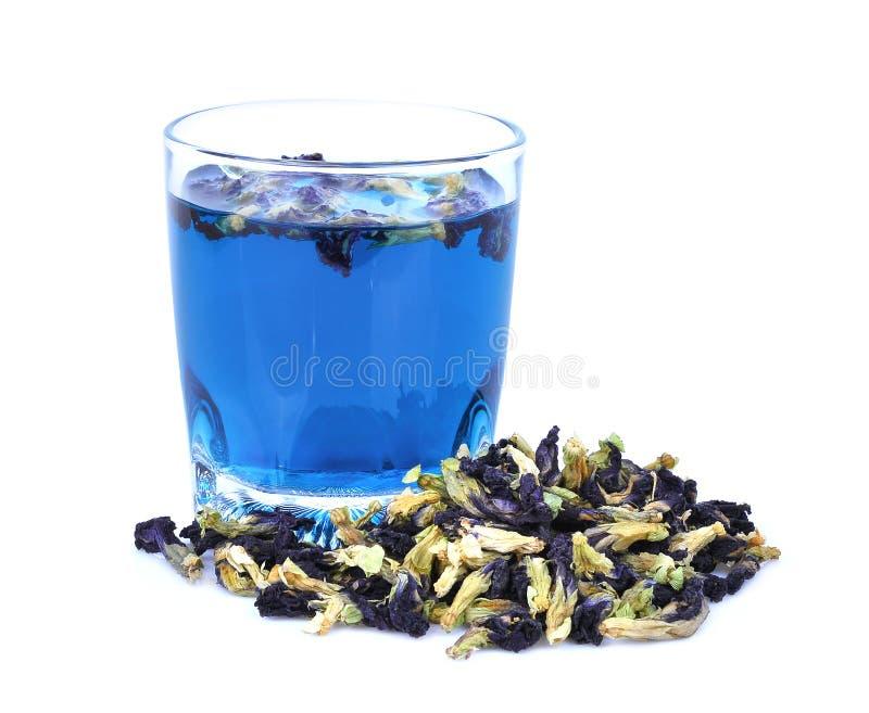 Fiore secco del pisello di farfalla con il tè del pisello di farfalla isolato fotografie stock