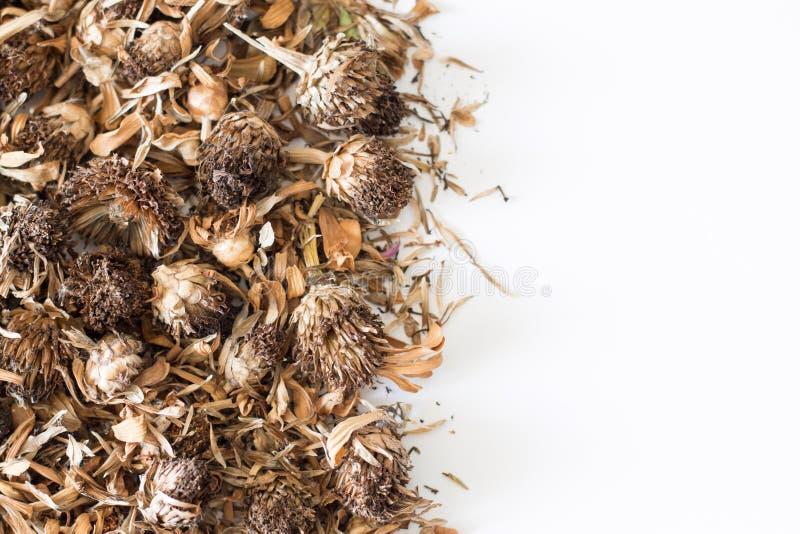 Fiore secco di zinnia (violacea Cav di zinnia ) fotografia stock