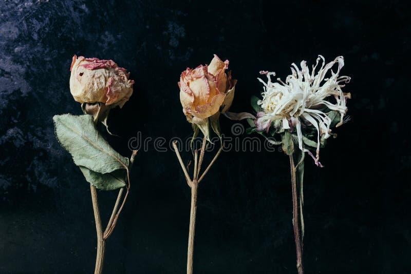 Fiore secco sopra il vecchio fondo nero del metallo fotografia stock libera da diritti