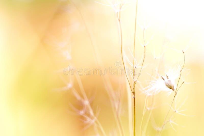 Fiore selvaggio fotografie stock libere da diritti