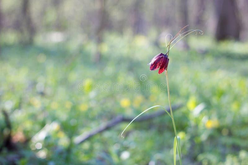 Fiore selvaggio della foresta Posto nell'ambito dell'iscrizione immagini stock libere da diritti