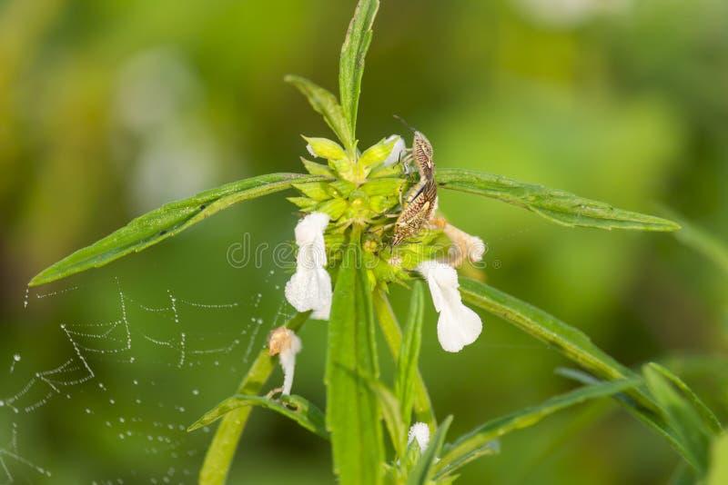 Fiore selvaggio della primavera con l'insetto fotografia stock