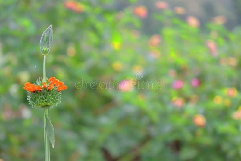 Fiore selvaggio, sfondo naturale fotografia stock