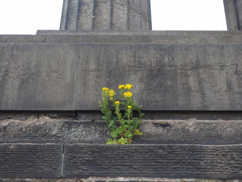 Fiore sopportato dalla pietra fotografia stock
