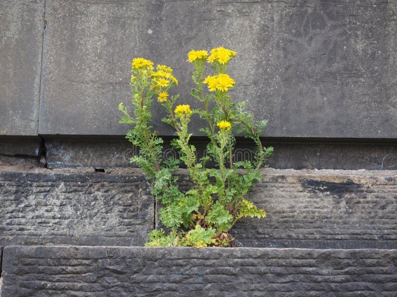 Fiore sopportato dalla pietra fotografie stock