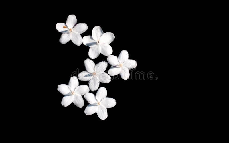Fiore su fondo nero immagini stock