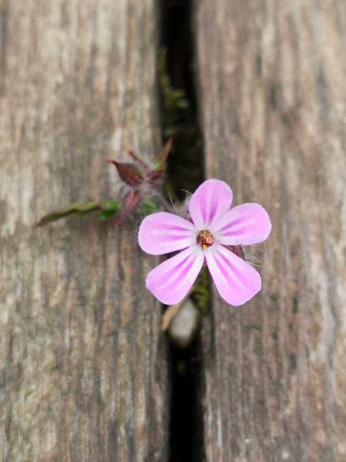 Fiore sul ponte fotografia stock