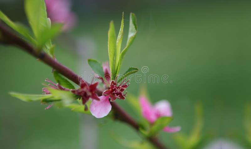 Fiore sull'albero immagini stock libere da diritti