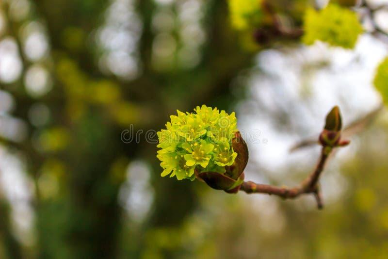 Fiore sull'albero immagine stock