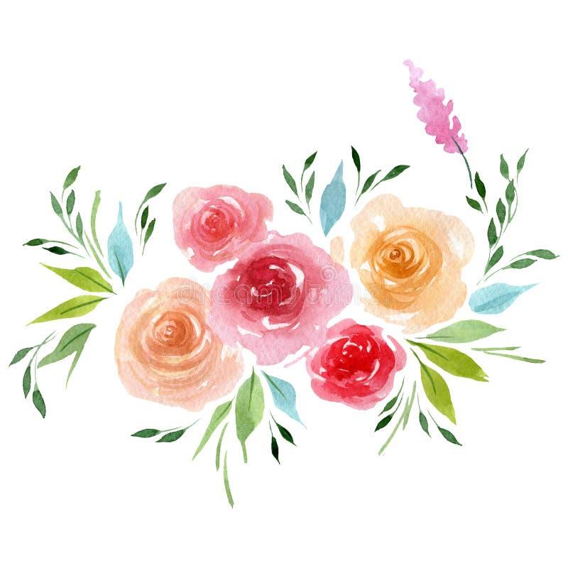 Fiore tenero della peonia dell'acquerello Fiore botanico floreale Elemento isolato dell'illustrazione illustrazione di stock