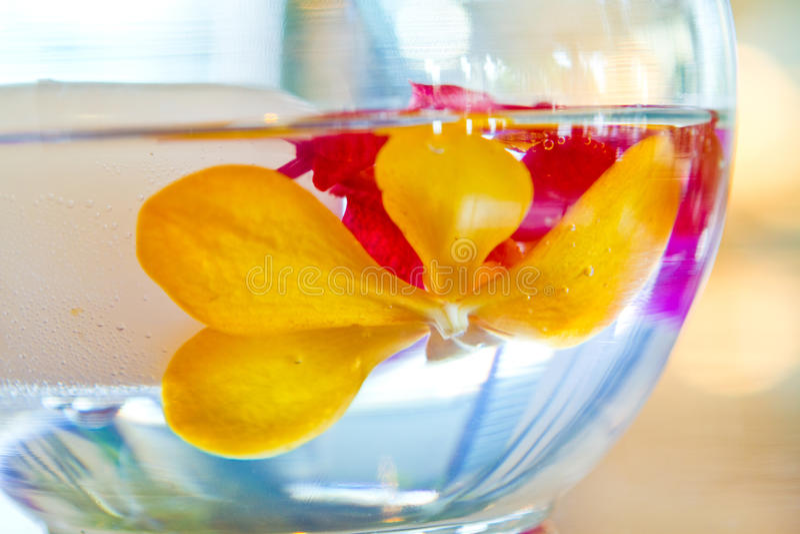 Fiore tropicale immagini stock