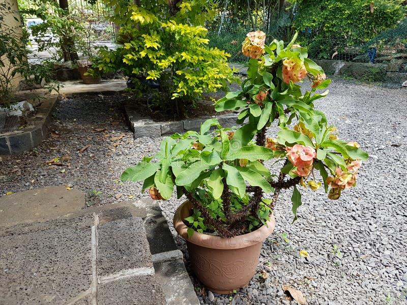 Fiore in un POT fotografie stock libere da diritti