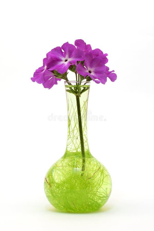 Fiore in un vaso di vetro immagine stock