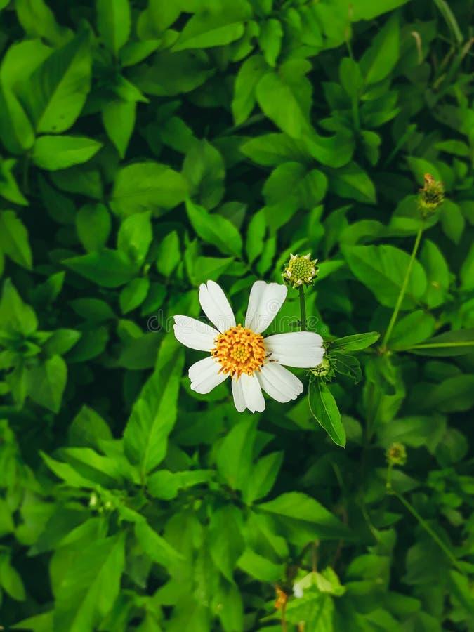 Fiore variopinto fotografie stock libere da diritti