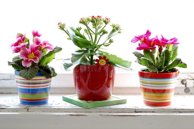Fiore variopinto immagini stock