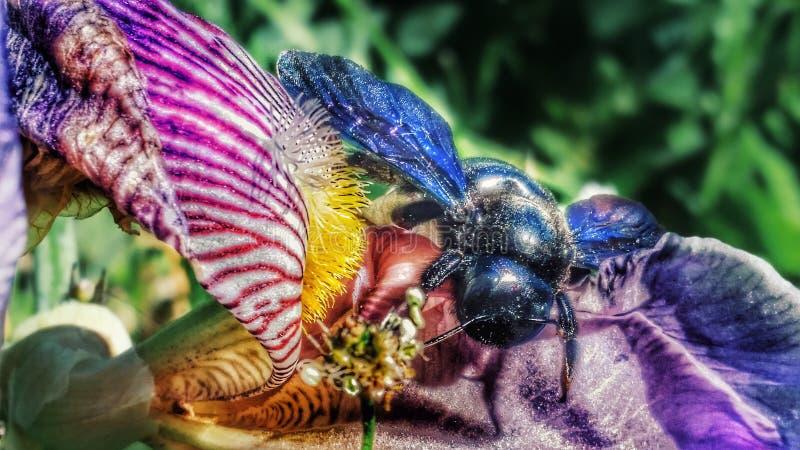 Fiore variopinto e insetto fotografia stock libera da diritti